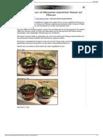 Strahlenfolter Stalking - TI - Die Wirkung Von Mit Mikrowellen Bestrahltem Wasser Auf Pflanzen
