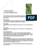 A Quick Guide Peas in Central Florida