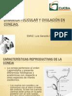 Dinamica Folicular y Ovulación en Conejas