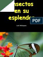 Insectos en Su Esplendor-10715