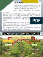 148674292 Plagas Del Tomate