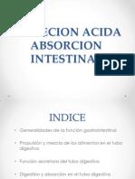 Secrecion Acida Absorcion Intestinal