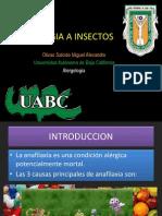 heminopteros 1.pptx