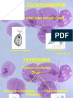 Trichomonas Spp 2014