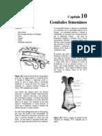 Capítulo Anatomía de Los Genitales Femeninos