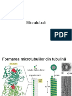 microtubulii2umfcd
