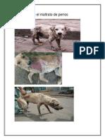 Anexos Sobre El Maltrato de Perros