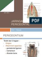 ANATOMI Periodontal