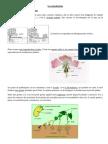 Reproduction Des Vegetaux
