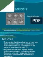14 - Presentación 14 - Meiosis