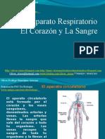 15 - Presentación 15 - Aparato Circulatorio - El Corazón Y La Sangre