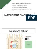 Capitulo 12-12 Memb_Plasma