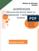 Macrófagos Pato