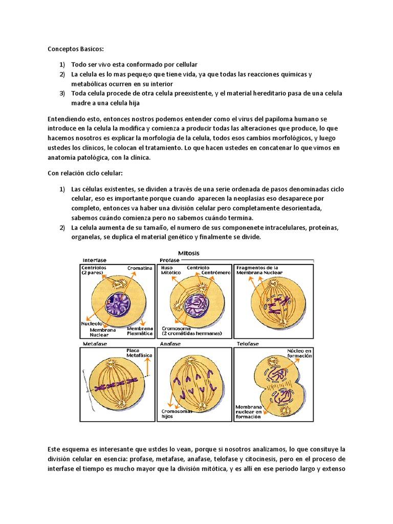 Único El Ejercicio Anatomía Celular Y La División 3 Ornamento ...
