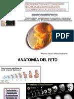 Seminario Bienestar Fetal Final