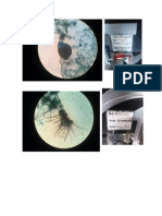 Micro Lab Ultimo
