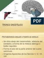 Diapos Tronco encefalico