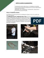 Praktikum Bolesti Životinja III Razred