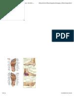 Mappa Rifllessologia