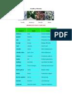Semillas y Plántulas