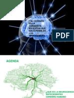 neurocienciayeducacion-130713091741-phpapp01