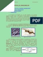 metodos de transformacion.pdf