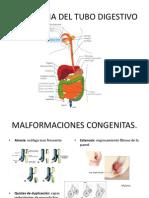 Patologia Del Tubo Digestivo