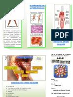 Triptico Del Sistema Muscular