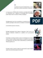Divisiones de La Psicología