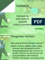 Ppt Hormon