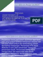 Persemaian Benih Padi Sawah