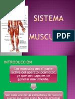 Sistemas Muscular