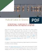 The Birds of Pulicat Lake vs Dugarajapatnam Port