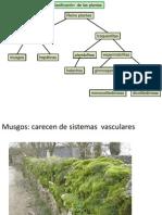 Plantas Correcto 2014