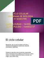Ciclo celularisabela