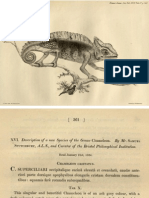 Stutchbury (1837)-Description of a New Species of the Genus Chamaeleo