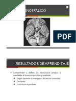 Clase 35 Tronco Encefalico y Cerebelo
