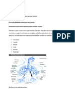 HomeParts of the Respiratory System and their Function.docx