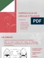 Embriologia de Lengua y Paladar Fin