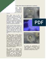 CULTIVO DE pejerrey_desove.pdf