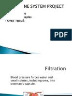 peeplesmerisme urinarysystem