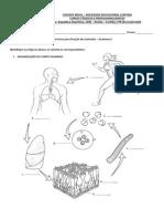 Anatomia i - Imagens