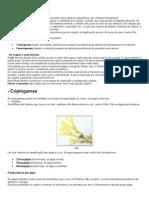 -Caracterizacao.pdf