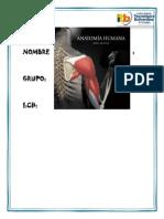 DEFINICION de La Anatomía
