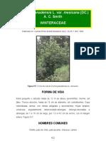Drymys granadensis
