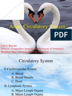 Avian Circulatory System