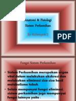 Anatomi & Fisiologi Sistem Perkemihan