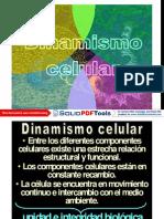 Dinamismo Celular