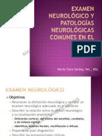 CIRUGIA - Examen Neurológico y Patologías Comunes en El Equino