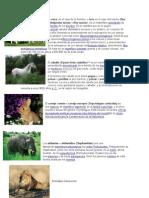 Animales Herbívoros y Carniboros